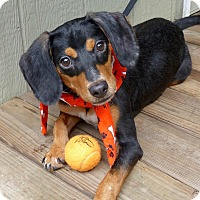 Adopt A Pet :: Grover - Baton Rouge, LA