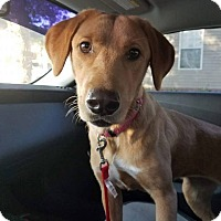 Adopt A Pet :: addy-pending adoption - Manchester, CT