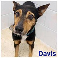 Adopt A Pet :: Davis - Garden City, MI