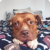 Adopt A Pet :: Lola - Brooklyn, NY