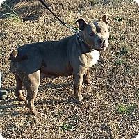Adopt A Pet :: Emma - Carthage, NC