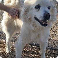 Adopt A Pet :: Snow White - New River, AZ