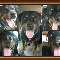 Adopt A Pet :: Tosha & Tank - San Martin, CA