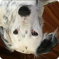 Adopt A Pet :: TUCKER - Pine Grove, PA
