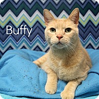 Domestic Shorthair Cat for adoption in Melbourne, Kentucky - Buffy