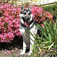 Adopt A Pet :: acy - San Diego, CA
