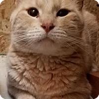 Adopt A Pet :: Rosco - Colfax, IA
