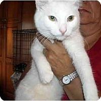Adopt A Pet :: Snow - Riverside, RI
