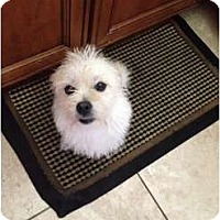 Adopt A Pet :: Saki - Oceanside, CA