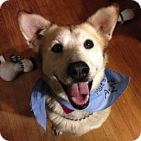 Adopt A Pet :: Molly - Wilmette, IL
