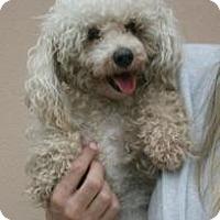 Adopt A Pet :: Mandy - Canoga Park, CA