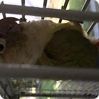 Adopt A Pet :: Larry - Punta Gorda, FL