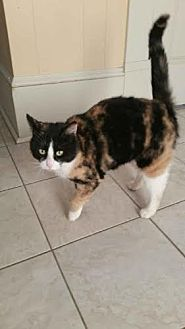 Calico Cat for adoption in Buford, Georgia - Bar-b-Que $35.00
