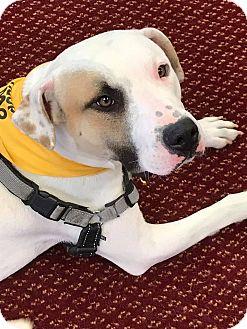 Retriever (Unknown Type) Mix Dog for adoption in Walden, New York - Blake