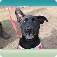 Adopt A Pet :: KJ - McDonough, GA