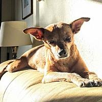 Adopt A Pet :: Tiki - San Francisco, CA