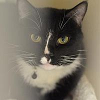 Adopt A Pet :: Archer170197 - Atlanta, GA