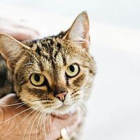 Adopt A Pet :: Bess - Durham, NC