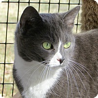 Adopt A Pet :: French - Port Jervis, NY