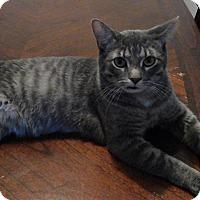 Adopt A Pet :: Baldr - Covington, KY