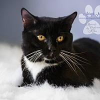 Adopt A Pet :: SOX - Toledo, OH