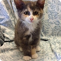 Adopt A Pet :: Laurie - Larned, KS