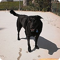 Adopt A Pet :: Dakota - Wallaceburg, ON