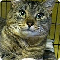 Adopt A Pet :: Julian - Medway, MA