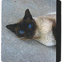 Adopt A Pet :: Wesley - Morgan Hill, CA