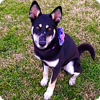 Adopt A Pet :: DAKOTA - Fort Worth, TX