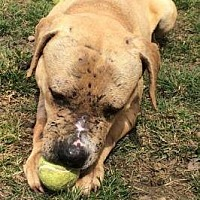 Adopt A Pet :: Timber - New Richmond,, WI