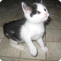 Adopt A Pet :: Maxie - Kirkwood, DE