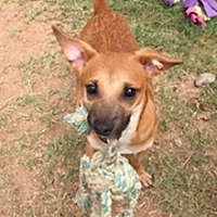 Dachshund Mix Dog for adoption in Phoenix, Arizona - Michael