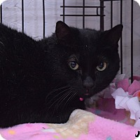 Adopt A Pet :: Gwen - Flushing, MI