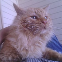 Adopt A Pet :: Rom - Ravenna, TX