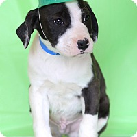 Adopt A Pet :: Quincy - Waldorf, MD