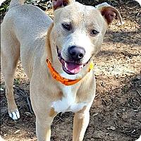 Adopt A Pet :: Kingston - McKinney, TX