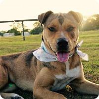 Adopt A Pet :: Gretchen - Williston, FL