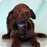 Adopt A Pet :: Metallica - Waldorf, MD