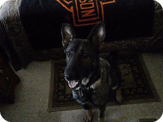 German Shepherd Dog Dog for adoption in Green Cove Springs, Florida - Remedy