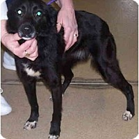 Adopt A Pet :: Deka - Toronto/Etobicoke/GTA, ON
