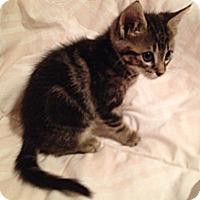 Adopt A Pet :: Spidey - San Diego, CA