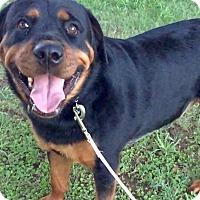 Adopt A Pet :: Suady - Gilbert, AZ