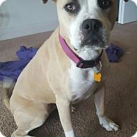 Adopt A Pet :: Molly - Ocean Ridge, FL