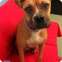Adopt A Pet :: Roxy - Georgetown, SC