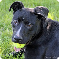 Adopt A Pet :: Axle - Troy, MI