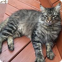 Adopt A Pet :: Ozzy - Mount Pleasant, SC