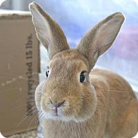Adopt A Pet :: Sunny - Fairport, NY