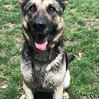 Adopt A Pet :: Hana - Walnut Creek, CA