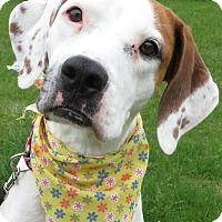 Adopt A Pet :: Dora - Menomonie, WI